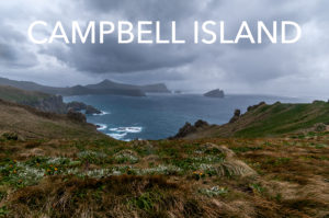 campbell_eaw_6990-editweb