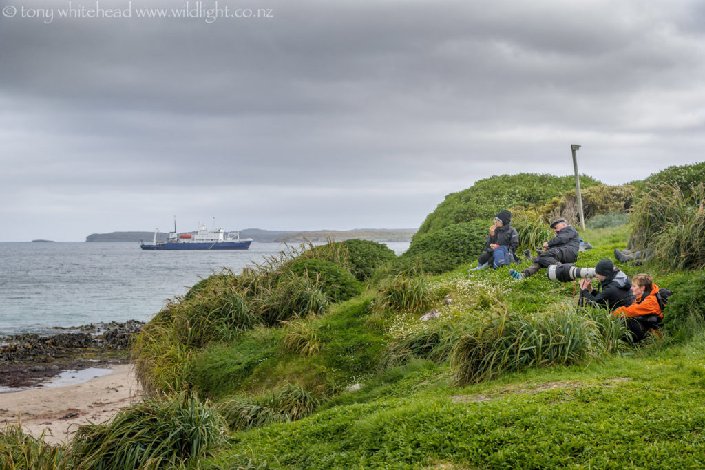 Edin with Richie Robinson watching Yellow-eyed Penguins and New Zealand Sea Lions returning from the sea, Enderby Island