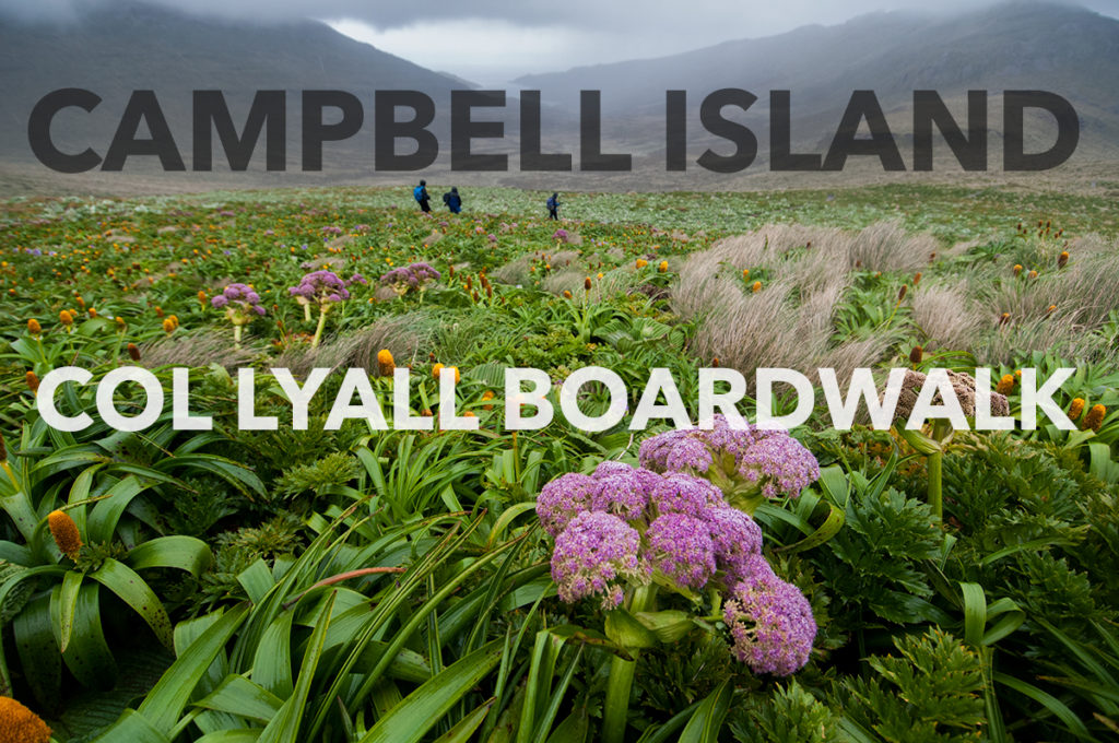 Campbell_ColLyall_Splash_EAW_7426-EditWEB-1024x680.jpg