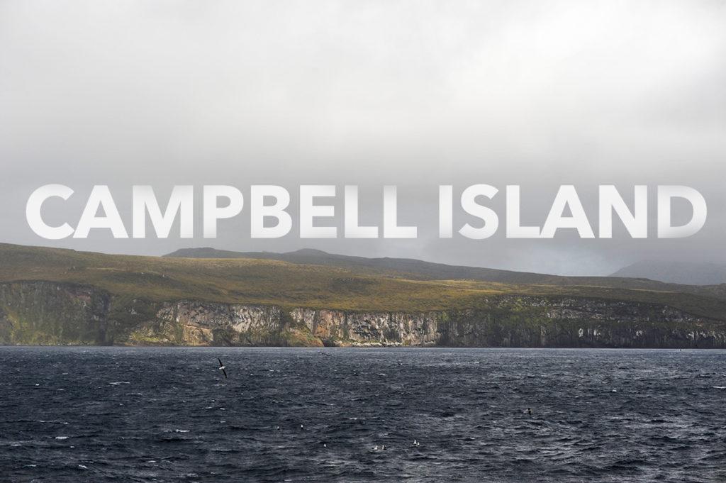 Campbell_Island_TW7_7187-EditWEB-1024x681.jpg