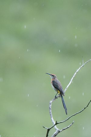 SugarBird_EAW_8615-Edit3WEB.jpg