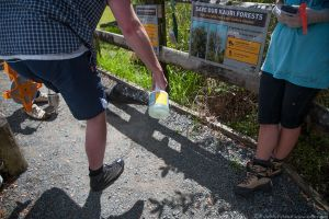Cleaning shoes with Trigene to stop spread of Kauri Dieback