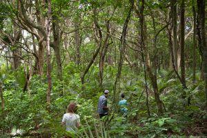 Native forest fragment near Pukekohe